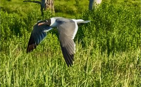 Bird flying over grass